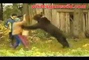 funny animals goes Animals wild