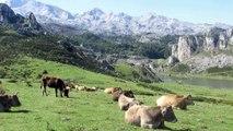 lagos de Covadonga, Enol y Ercina en el parque nacional de los Picos de Europa en Asturias