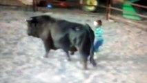 Un niño demuestra a los toreros que los toros no son violentos por naturaleza