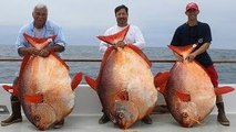 Big Fishes of the World: Lucky anglers catch THREE extremely rare OPAH fish in one day