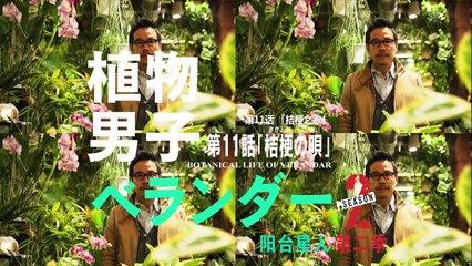 植物男子陽台星人2 第11集 Verandar 2 Ep11