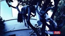 Ghost Adventures S11E03 - Manresa Castle HD
