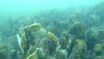 Plongée profonde Zélande 08/2015