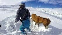 Deux snowboarders sauvent un cheval bloqué dans la neige depuis 4 jours