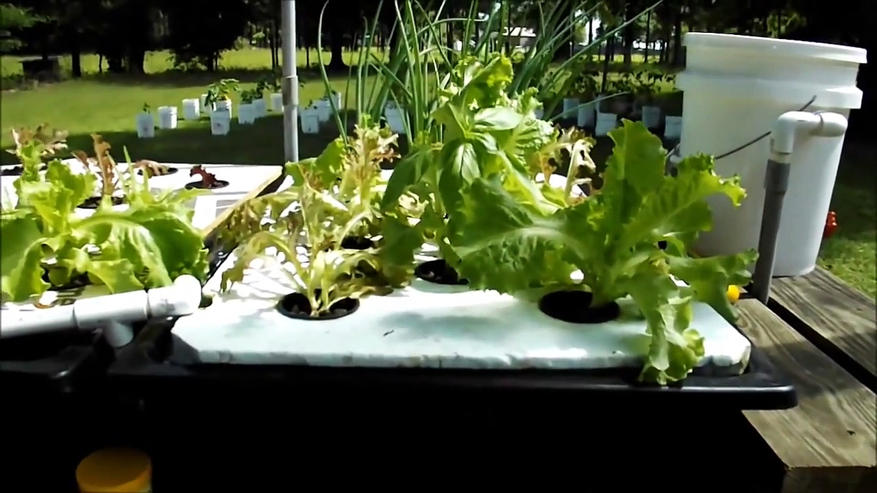 hydroponic farming documentary, Home mad Hydroponic farm, hydroponic farming systems