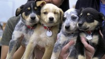Rescue Dogs And Cats Are The Best, Most Adorable Dogs And Cats