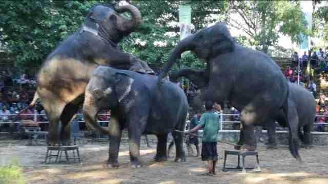 """Los elefantes de un zoo de Sri Lanka """"bailan"""" para celebrar el Día del Niño"""