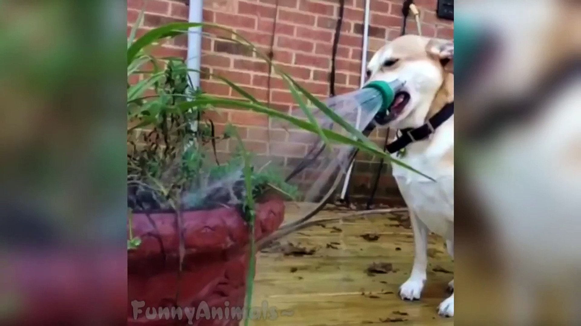 Pets and Animals Vines Compilation - Funny Animals Vines 2015