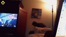 FUNNY VIDEOS  Funny Cats - Funny Cat Videos - Funny Animals - Fail Compilation - Cats Fails