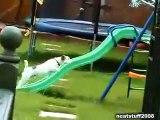 ★ PERRO JUGANDO CON EL TOBOGAN - MUY DIVERTIDO - Perros Locos Humor Divertidos Chistosos risa