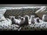 El Baile De Los Gatitos! ★ Gato divertido gato chistoso gato tierno loco risa humor