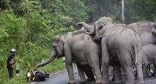 Des éléphants attaquent un motard en Thaïlande