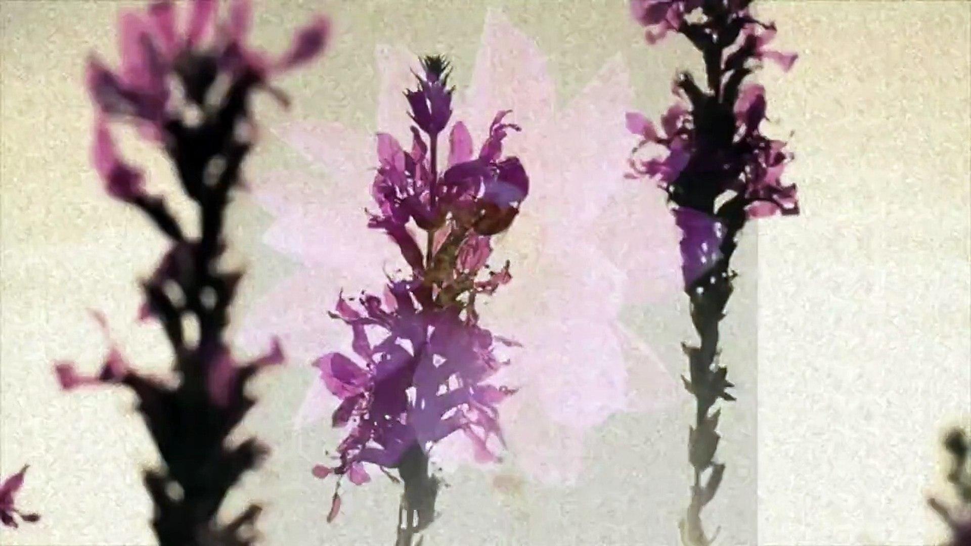 Jack J (Jack and Jack) Bloom/Bouquet | Lyrics