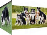 Border Collie Dog Breed | Dog picture ideas of breed Border Collie dog
