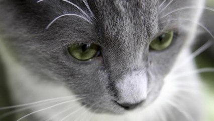 How do I interpret my cat's body language?: How To Read Your Cat's Body Language