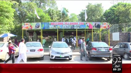 Punjab University Ny 3Mahh ky Cheety Ko Chirya Ghar Sy Godh Ly Liya – 22 Oct 15 - 92 News HD