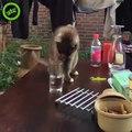 Troller un chat avec un verre d'eau