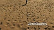 Rio Doce, a vida por um fio