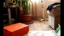 Gato Camina Rarisimo! ★ Gato divertido gato chistoso gato tierno loco risa humor_2