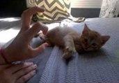 Skids the Kitten Relaxes After Becoming Online Sensation