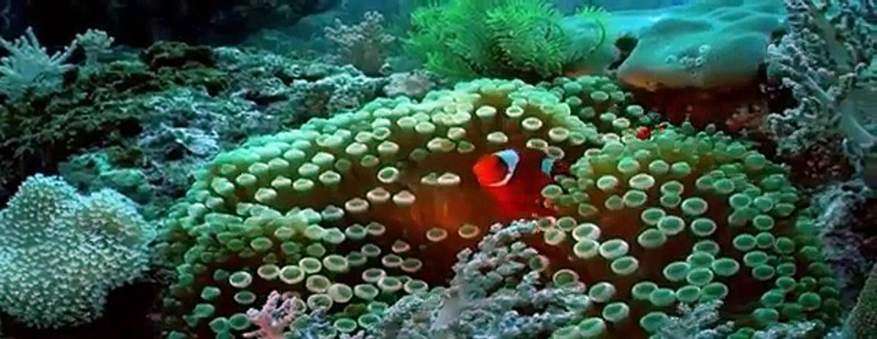Clown Fish - My animal friends - Animals Documentary -Kids educational Videos