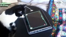 Chats drôles jouant sur iPad Compilation 2014 [NEW HD]