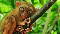 10 Strange, Weird, and Bizarre Animals That You Didn t Know