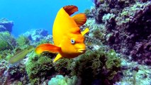Volunteers Help Monitor Recovery of Catalina Island Reef | Edison International