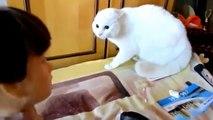 Katzen Video Lustige Katzen Videos in nur einer Compilation !!! #2
