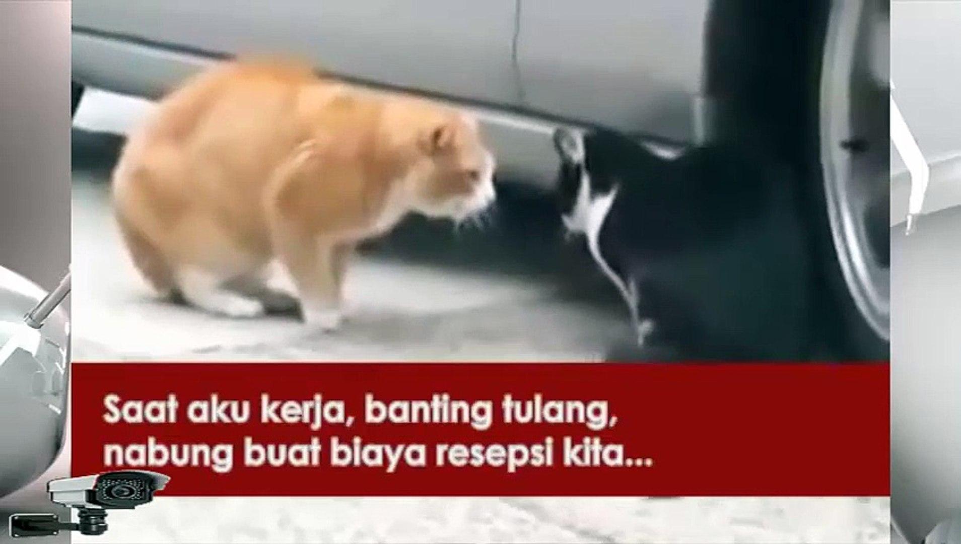 Kreatif Asli Ngakak Pertengkaran Kucing Pakai Terjemahan Indonesia