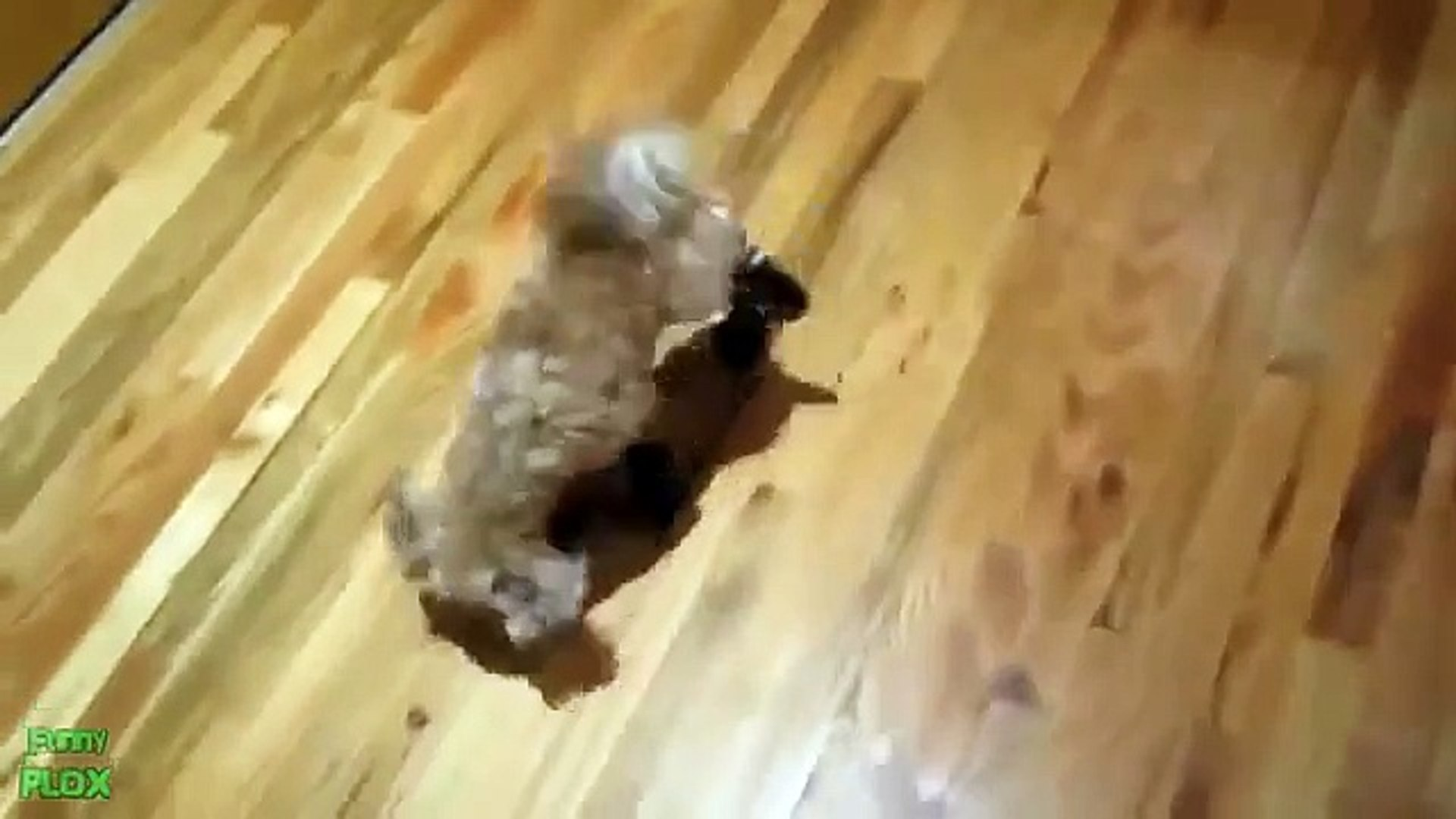 Pets laugh. Funny and fun pets