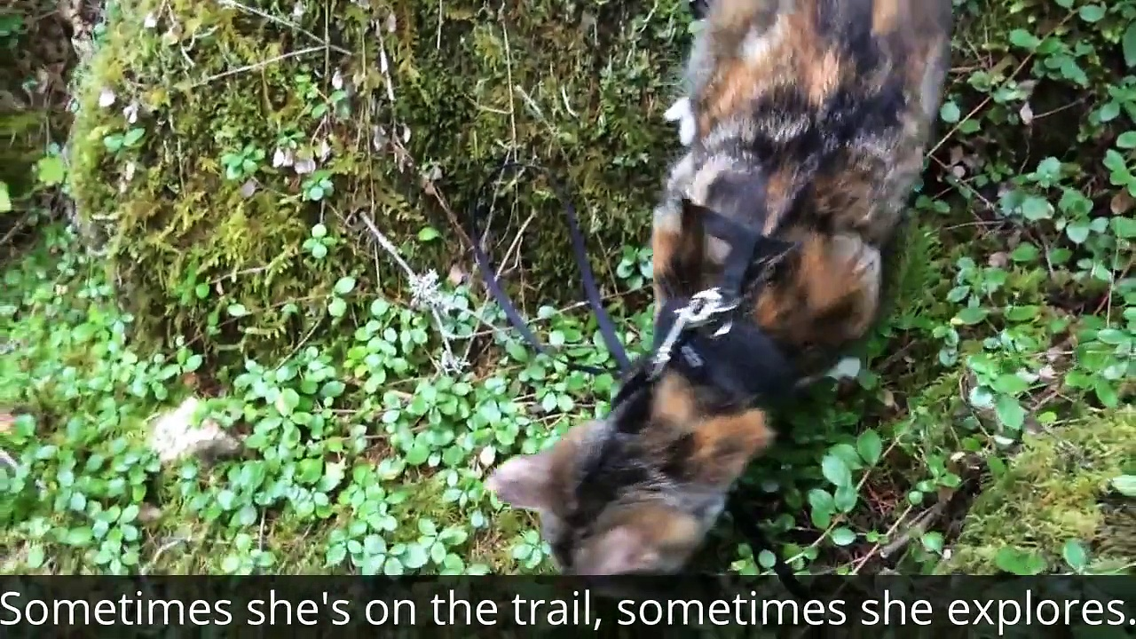 Honey Bee: Blind Cat Goes Hiking