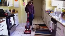 Funny dog videos 2015 try not to laugh - Love Funny video animals 2015