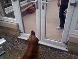 Ce chien n'est pas très malin