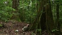 Bande-annonce : Il Etait une Forêt - Teaser VF