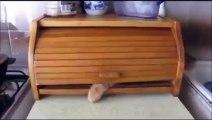 Un chat joue à cache-cache... Et la patte tu la caches pas
