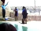 A seal in Ocean World, Dominican Republic, dancing merengue.