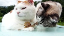 Chats mignons Amours l'escargot - Cute cats Loves snail