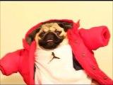 Hilarious Drake s Hip Hop dog! Call me on my cellphone parody