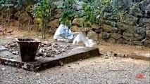 Cat Igrunov. Funny cat avec un chaton joue le fou