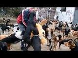 Un homme recueille chez lui 450 chiens abandonnés et maltraités, admirez ce qu'il fait avec eux!