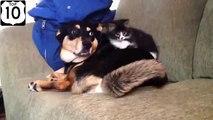 Cat chien tendresse. Chats drôles et chiens drôles les uns avec les autres