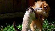 Chats gagner chiens. Les chats et les chiens drôles