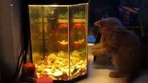 Chats contre aquariums. Amusez-vous avec les chats et les aquariums