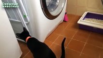 Cats and washing machines. Funny cats watching the work of washing machines