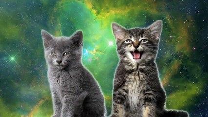 Des chats chantent dans l'espace