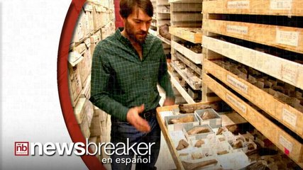 Descubren Fósiles de Nueva Especie de Dinosaurio en Alaska