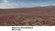 Buzz : Chili le désert de l'Atacama en fleurs !