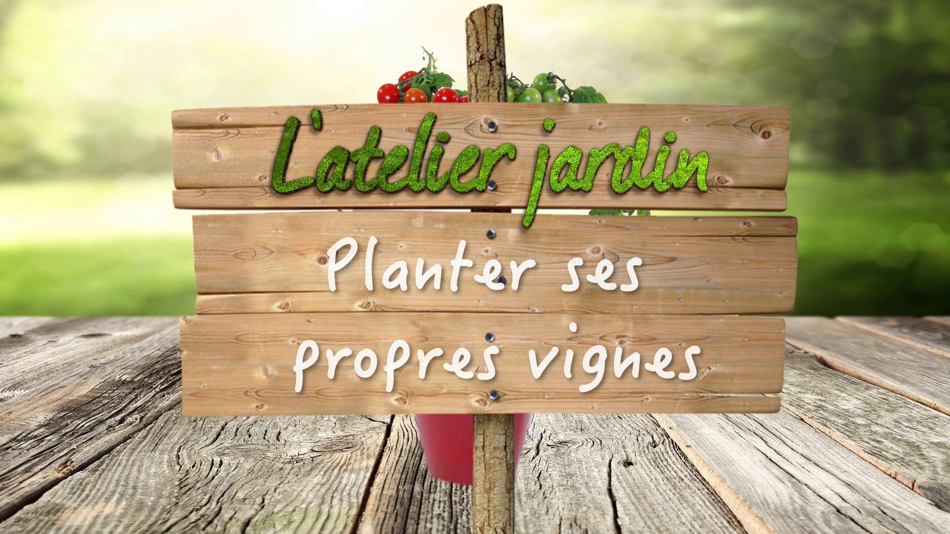Comment Planter Une Vigne Grimpante comment planter ses propres vignes ?