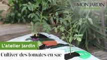 Comment cultiver des tomates en sac ?